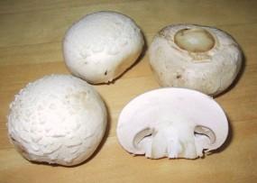 champignon de paris k rnerbrut pilzbrut pilzzucht online shop pilze selber z chten. Black Bedroom Furniture Sets. Home Design Ideas